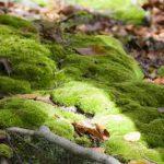 長野 北八ヶ岳 苔の森と白駒池へハイキング アクセスや駐車場を紹介します